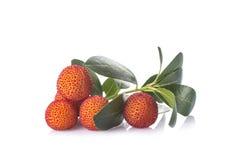 Φρούτα unedo Arbutus που απομονώνονται σε ένα άσπρο υπόβαθρο Στοκ Εικόνα
