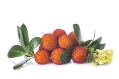 Φρούτα unedo Arbutus που απομονώνονται σε ένα άσπρο υπόβαθρο Στοκ Εικόνες