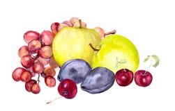 Φρούτα Watercolor: μήλο, σταφύλι, κεράσι, δαμάσκηνο watercolour σχέδιο Στοκ Φωτογραφία