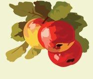 Φρούτα Watercolor της Apple Στοκ φωτογραφία με δικαίωμα ελεύθερης χρήσης