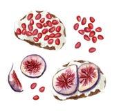 Φρυγανιές φρούτων Watercolor Στοκ Εικόνα