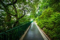 Φτέρες και δέντρα κατά μήκος μιας διάβασης πεζών στο Χονγκ Κονγκ ζωολογικό και Bota στοκ φωτογραφία με δικαίωμα ελεύθερης χρήσης