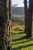 Φτέρες, λειχήνες και βρύο στο δάσος πεύκων στοκ φωτογραφία