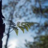Φτέρες, λειχήνες και βρύο στο δάσος πεύκων στοκ φωτογραφίες