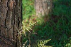 Φτέρες, λειχήνες και βρύο στο δάσος πεύκων στοκ φωτογραφία με δικαίωμα ελεύθερης χρήσης