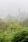 Φτέρες στη βροχή με Glendalough γύρω από τον πύργο στο υπόβαθρο Στοκ εικόνες με δικαίωμα ελεύθερης χρήσης