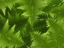 φτέρη ανασκόπησης πράσινη Στοκ Εικόνα