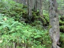 Φτέρη, βρύο και δέντρα Στοκ εικόνα με δικαίωμα ελεύθερης χρήσης