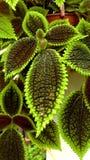 Φτέρη ενός houseplant με τα μακριά πράσινα φύλλα foreground στοκ εικόνες