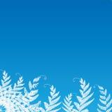 Φτέρη στην μπλε ανασκόπηση για το κείμενο Στοκ φωτογραφία με δικαίωμα ελεύθερης χρήσης