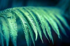 Φτέρη στη ζούγκλα στοκ εικόνα με δικαίωμα ελεύθερης χρήσης