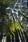 Φτέρη στο εγγενές δάσος NZ Στοκ φωτογραφία με δικαίωμα ελεύθερης χρήσης