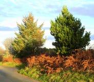 Φτέρη φθινοπώρου στοκ εικόνα με δικαίωμα ελεύθερης χρήσης