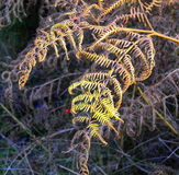 Φτέρη φθινοπώρου στοκ εικόνες