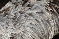 Φτέρωμα ενός rhea Στοκ Φωτογραφία