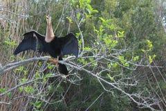 φτερά ήλιων στοκ φωτογραφία με δικαίωμα ελεύθερης χρήσης