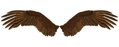 Φτερά αετών ` s Στοκ εικόνες με δικαίωμα ελεύθερης χρήσης