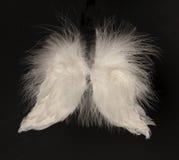φτερά γωνίας Στοκ φωτογραφία με δικαίωμα ελεύθερης χρήσης