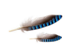φτερά δύο Στοκ φωτογραφία με δικαίωμα ελεύθερης χρήσης
