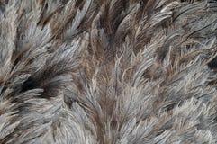 Φτερά ενός rhea Στοκ εικόνα με δικαίωμα ελεύθερης χρήσης