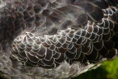 Φτερά λεπτομέρειας στοκ φωτογραφία