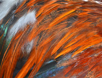 Φτερά κοτόπουλου Στοκ Φωτογραφία