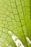 Φτερά μιας λιβελλούλης ως υπόβαθρο Στοκ εικόνα με δικαίωμα ελεύθερης χρήσης