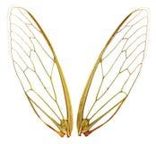 φτερά μονοπατιών wth Στοκ Φωτογραφίες