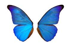 φτερά νεράιδων Στοκ Φωτογραφίες