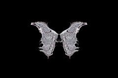 φτερά νεράιδων Στοκ Φωτογραφία