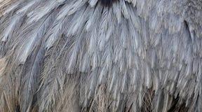 Φτερά ΟΝΕ στοκ εικόνα με δικαίωμα ελεύθερης χρήσης