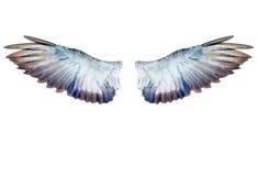 Φτερά περιστεριών που απομονώνονται στο λευκό Στοκ εικόνες με δικαίωμα ελεύθερης χρήσης