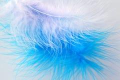 φτερά πουλιών s Στοκ Εικόνα