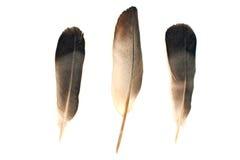 Φτερά που απομονώνονται στο άσπρο υπόβαθρο στοκ εικόνες
