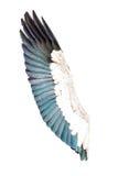 Φτερά πουλιών που απομονώνονται στο άσπρο υπόβαθρο Στοκ Εικόνες