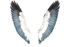 Φτερά πουλιών που απομονώνονται στο άσπρο υπόβαθρο Στοκ εικόνα με δικαίωμα ελεύθερης χρήσης