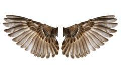 Φτερά πουλιών που απομονώνονται στο λευκό στοκ εικόνα