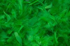 φτερά πράσινα Στοκ Φωτογραφίες