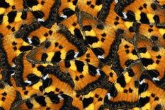 φτερά προτύπων πεταλούδων Στοκ φωτογραφίες με δικαίωμα ελεύθερης χρήσης