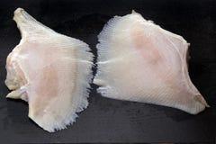 φτερά σαλαχιών Στοκ εικόνα με δικαίωμα ελεύθερης χρήσης