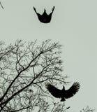 Φτερά στην κίνηση στοκ εικόνες