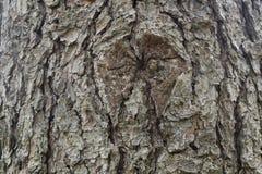 Φτερά στη σύσταση φλοιών δέντρων Στοκ φωτογραφίες με δικαίωμα ελεύθερης χρήσης