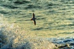 Φτερά της ελευθερίας Στοκ φωτογραφία με δικαίωμα ελεύθερης χρήσης