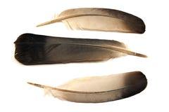 φτερά τρία στοκ φωτογραφίες