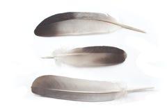 φτερά τρία στοκ εικόνες