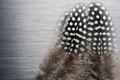 Φτερά φραγκοκοτών στο βουρτσισμένο μέταλλο Στοκ εικόνα με δικαίωμα ελεύθερης χρήσης