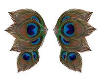 Φτερά φτερών peacock στο άσπρο υπόβαθρο Στοκ Εικόνα