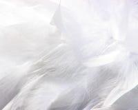 φτερά χνουδωτά Στοκ Φωτογραφίες