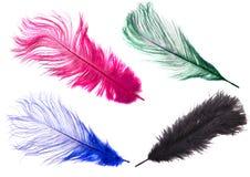 Φτερά χρώματος στοκ εικόνα