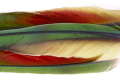 φτερά στοκ εικόνες
